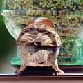Birdie Rump by Viki Velazquez
