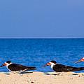 Birdline by Gary Dean Mercer Clark