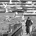 Birdman And Seagulls by SR Green