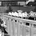 Birdman Of Lower Manhattan by SR Green
