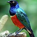 Birds 108 by Ben Yassa