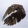 Birds 48 by Ben Yassa