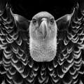 Birds 50 by Ben Yassa