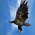 Birds 53 by Ben Yassa