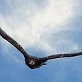 Birds 59 by Ben Yassa