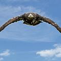 Birds 60 by Ben Yassa