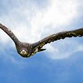 Birds 67 by Ben Yassa