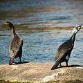 Birds And Lake by Shady Magdy