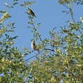 Birds At Peters Canyon by Linda Brody