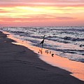 Birds At Water's Edge by Beth Williams