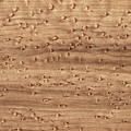 Birds-eye Pattern On Sugar Maple Wood Abstract In Nature by Phil Cardamone