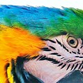 Bird's Eye View by Al Fritz