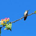 Bird's Eye View by Lynn Bauer