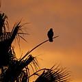 Birds Eye View Photograph by Kimberly Walker