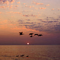 Birds Flying And Floating At Sunrise by Sven Brogren