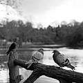 Birds I by Olivier De Rycke