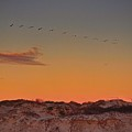 Birds In Flight At Sunrise by Kristina Deane