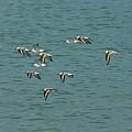 Birds In Flight by Colleen Fox