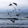 Birds In Flight by Deborah  Crew-Johnson