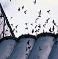 Birds In Flight by Sharon Green