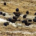 Birds In The Mud by William Tasker