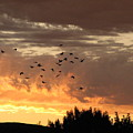 Birds In The Sky by Kathy Roncarati