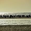 Sunset Birds  by Boris Andresyuk