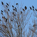 Birds In The Trees by Kathy Roncarati