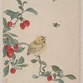 Birds Insects And Flowers by Yi Zhai