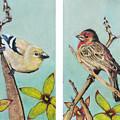 Birds by Jeanne Fischer