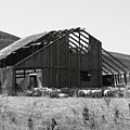 Birds Landing Barn by Troy Montemayor