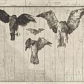 Birds Nailed To A Barn Door (le Haut D'un Battant De Porte) by F?lix Bracquemond