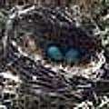 Birds Nest by Kayla Reno