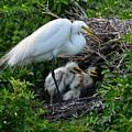 Birds Of A Feather Nest Together by Patricia Twardzik