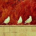 Birds Of A Feather by Robert ONeil