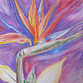 Birds Of Paradise by Colleen Koranek