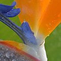 Birds Of Paradise by Kelly Wade