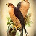 Birds Of Prey 1 by Charmaine Zoe
