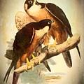 Birds Of Prey 2 by Charmaine Zoe