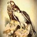 Birds Of Prey 3 by Charmaine Zoe