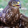 Birds Of Prey Series 3 by Bob Slitzan