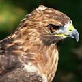 Birds Of Prey Series 5 by Bob Slitzan