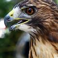Birds Of Prey Series by Bob Slitzan