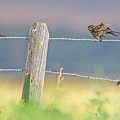 Birds On A Barbed Wire Fence by Jennie Marie Schell