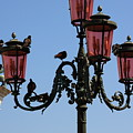 Birds On A Lamp Post In Venice by Michael Henderson