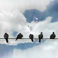 Birds On A Wire by John Anderson