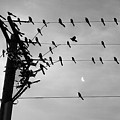 Birds On A Wire by Lionel Martinez