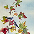 Birds On Maple Tree 7 by Ying Wong