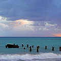 Birds On Old Jetty- St Lucia by Chester Williams