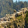 Birds On The Rocks by Jonny D